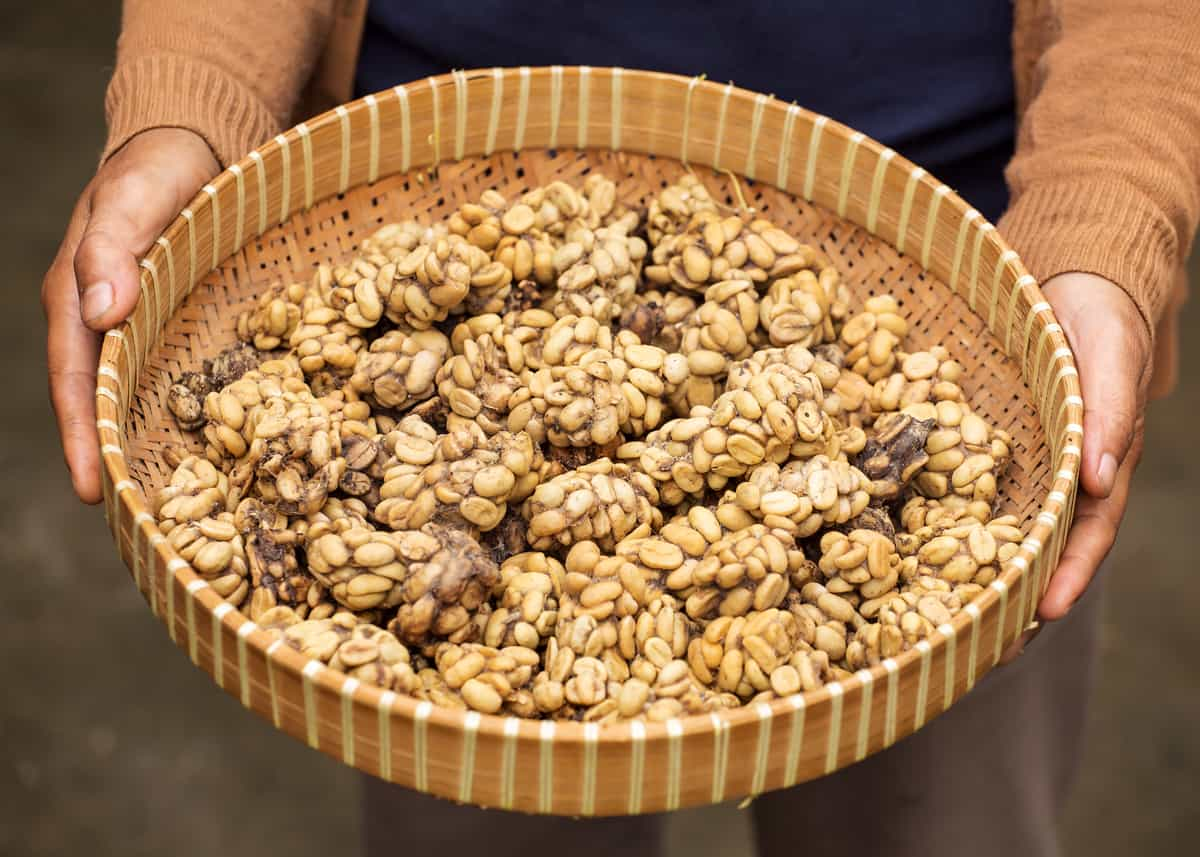 Civet Coffee: All About Kopi Luwak Coffee (and the cat ...